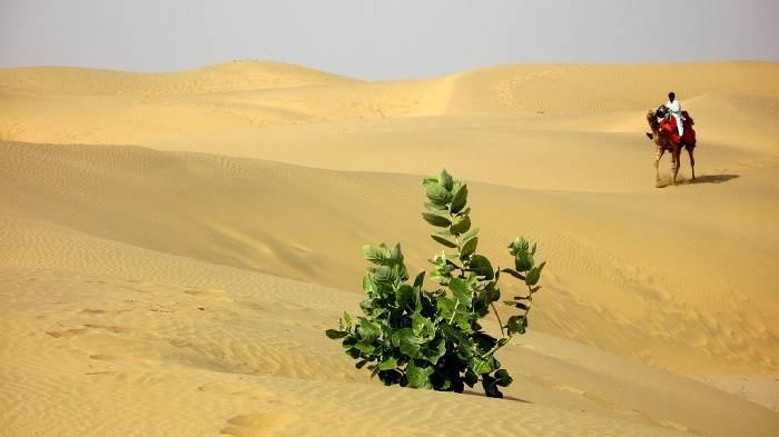 019. Desert of Jaisalmer.jpg